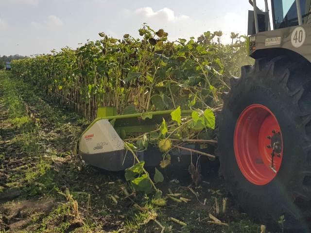 Zonnebloemen hakselen voor Hansketien in Mantinge