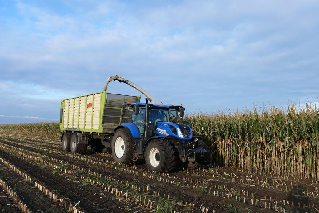 Maïs- en grasoogst bij mts. Blauw in  Eursinge