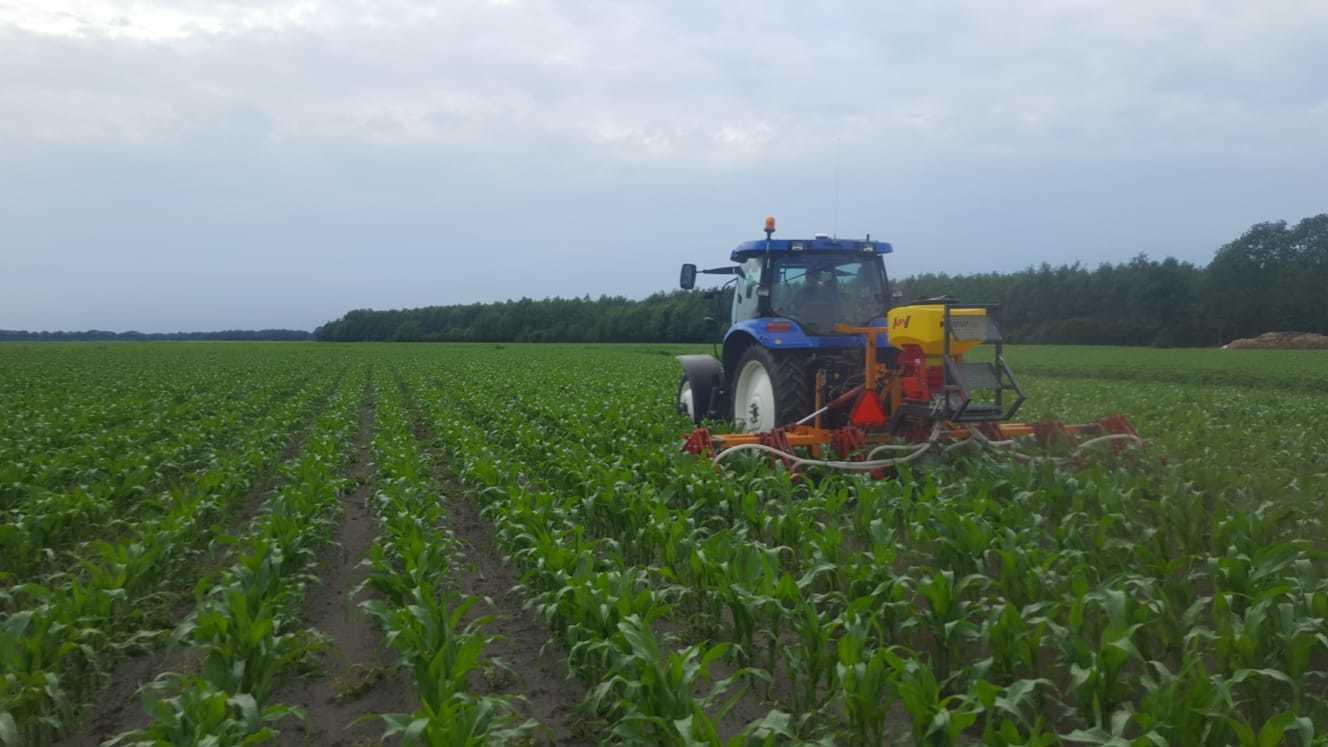 Maïs onderzaaien